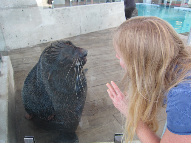 Dr Lynn Margolies Psychologist Newton MA with Sea Lion